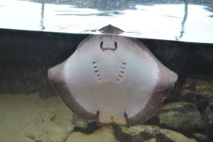 oceanarium 085